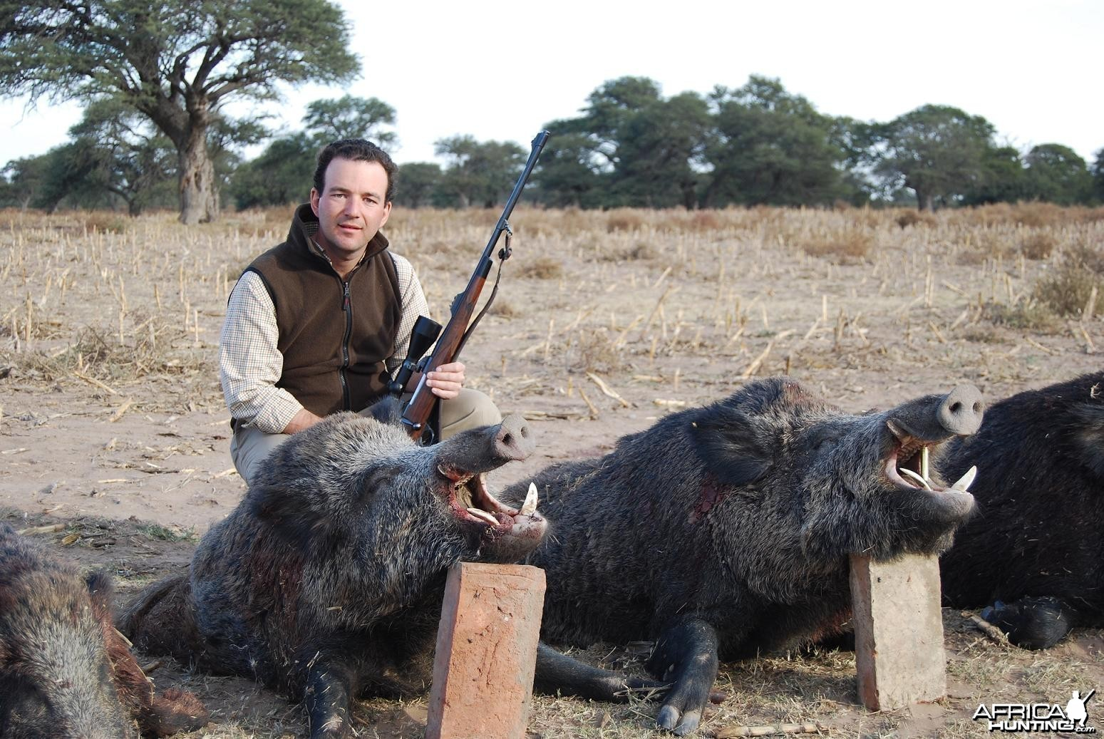 Wild Boars shot in Argentina