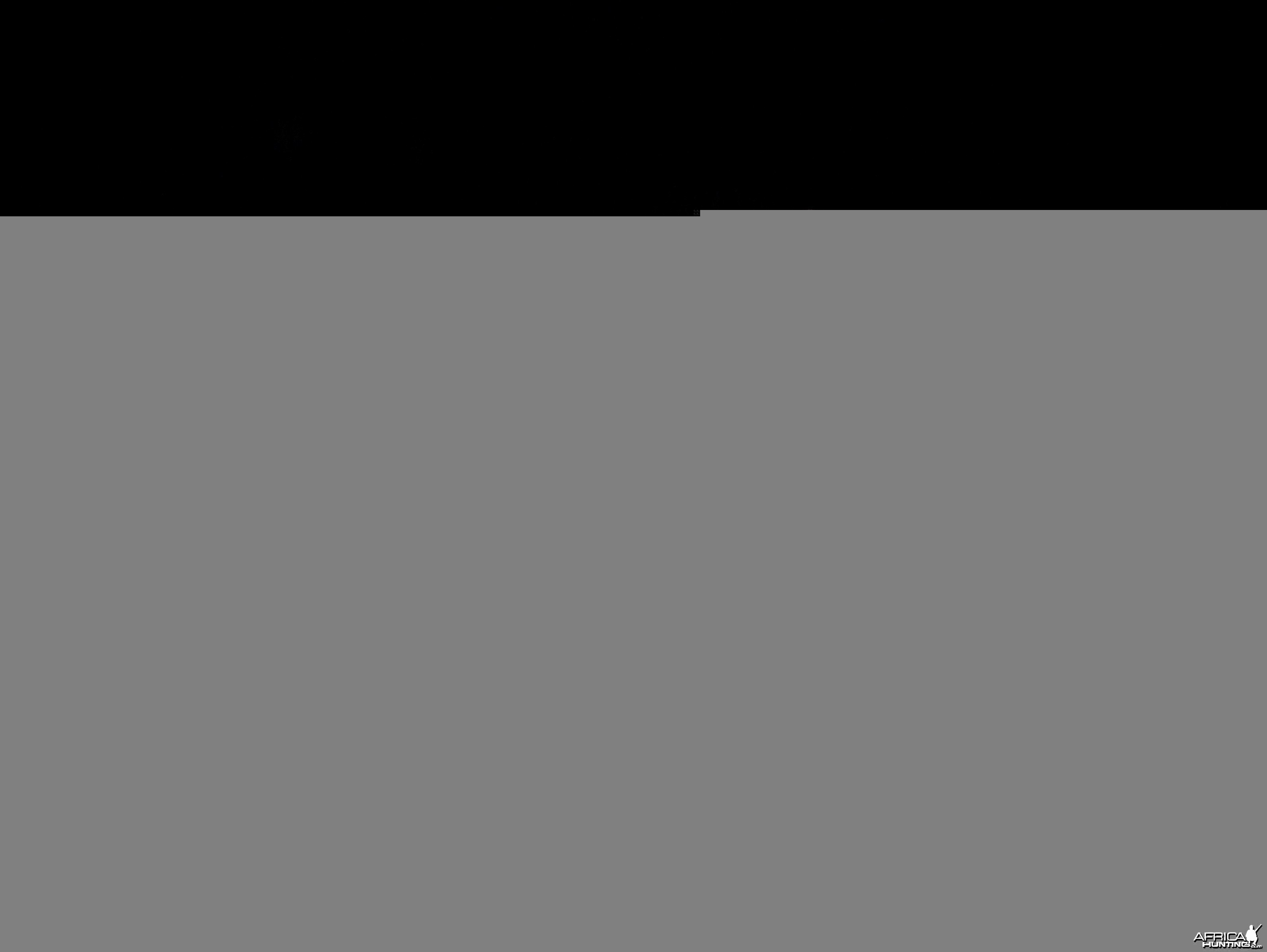 2010 RSA Hunter Wildebeest