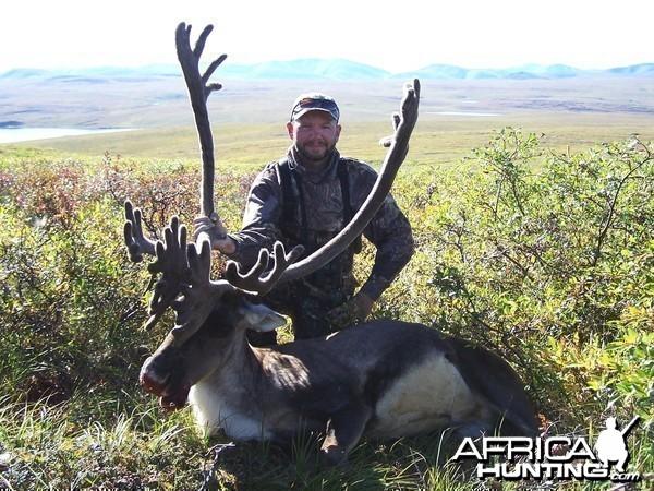 Caribou 2005 Alaska