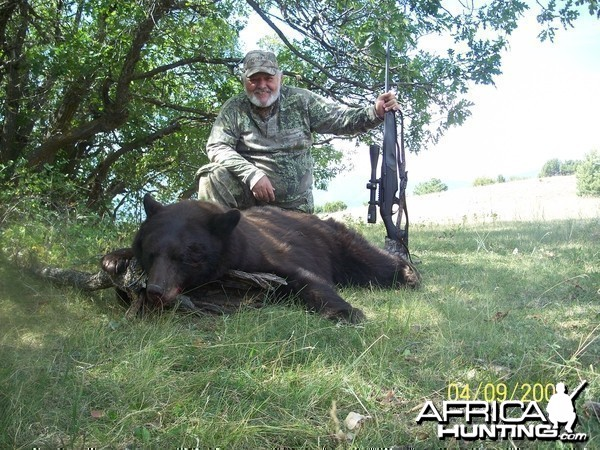 colorado bear hunt by manny fajin