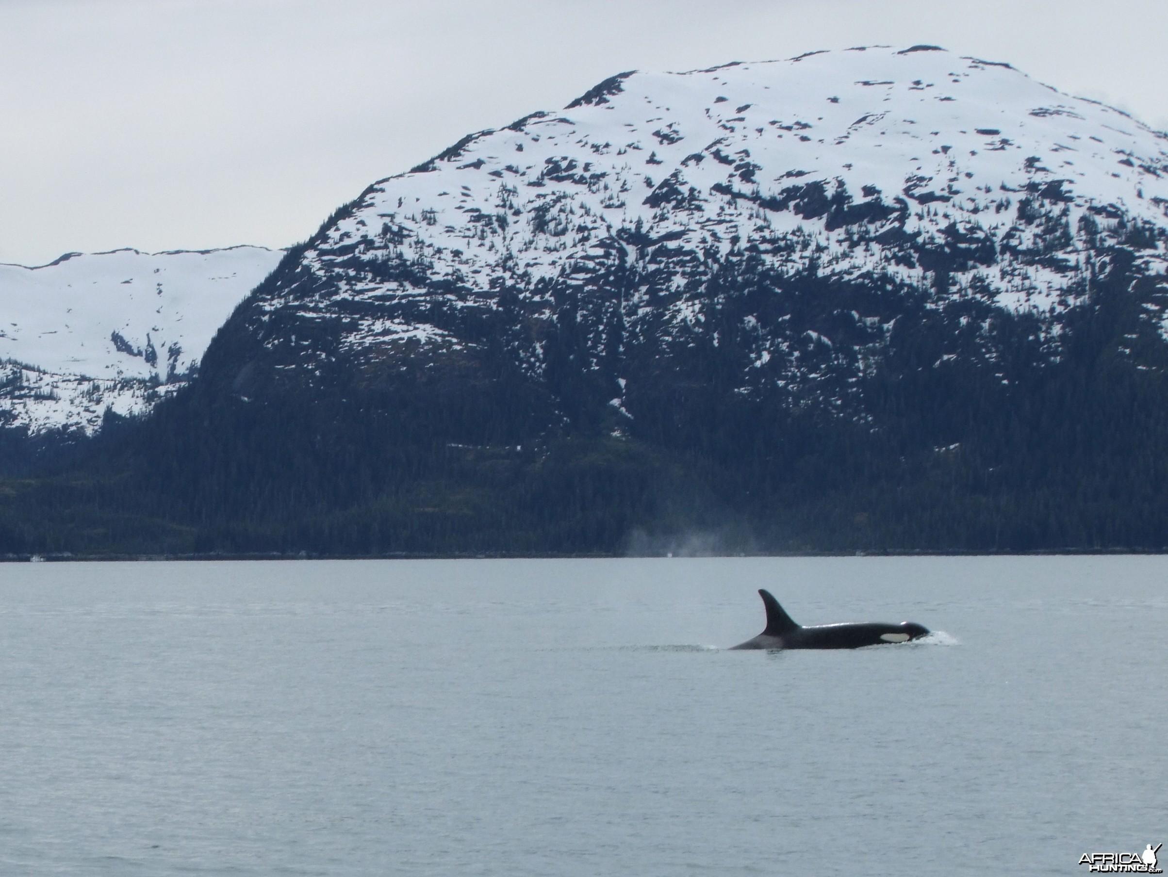 2010 Alaska Orca