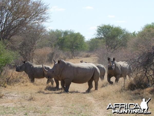 2010 RSA Rhinos