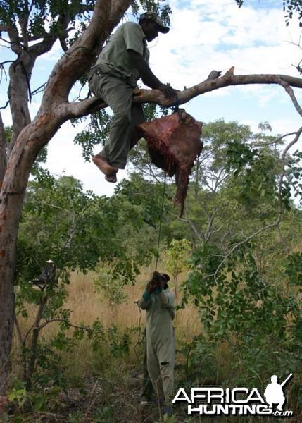leopard Hanging Baits Zimbabwe