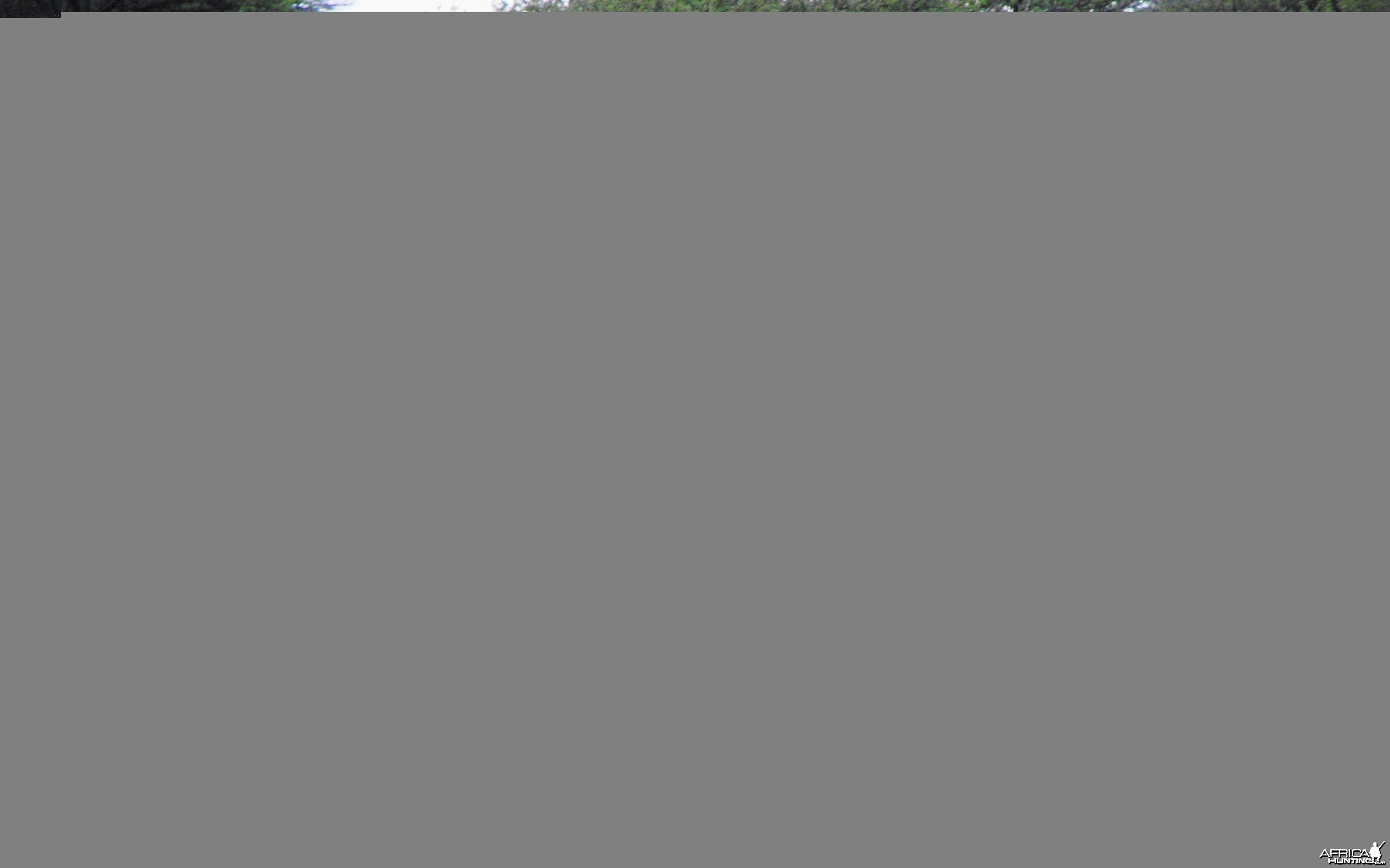 Can you spot the Steenbuck ram?