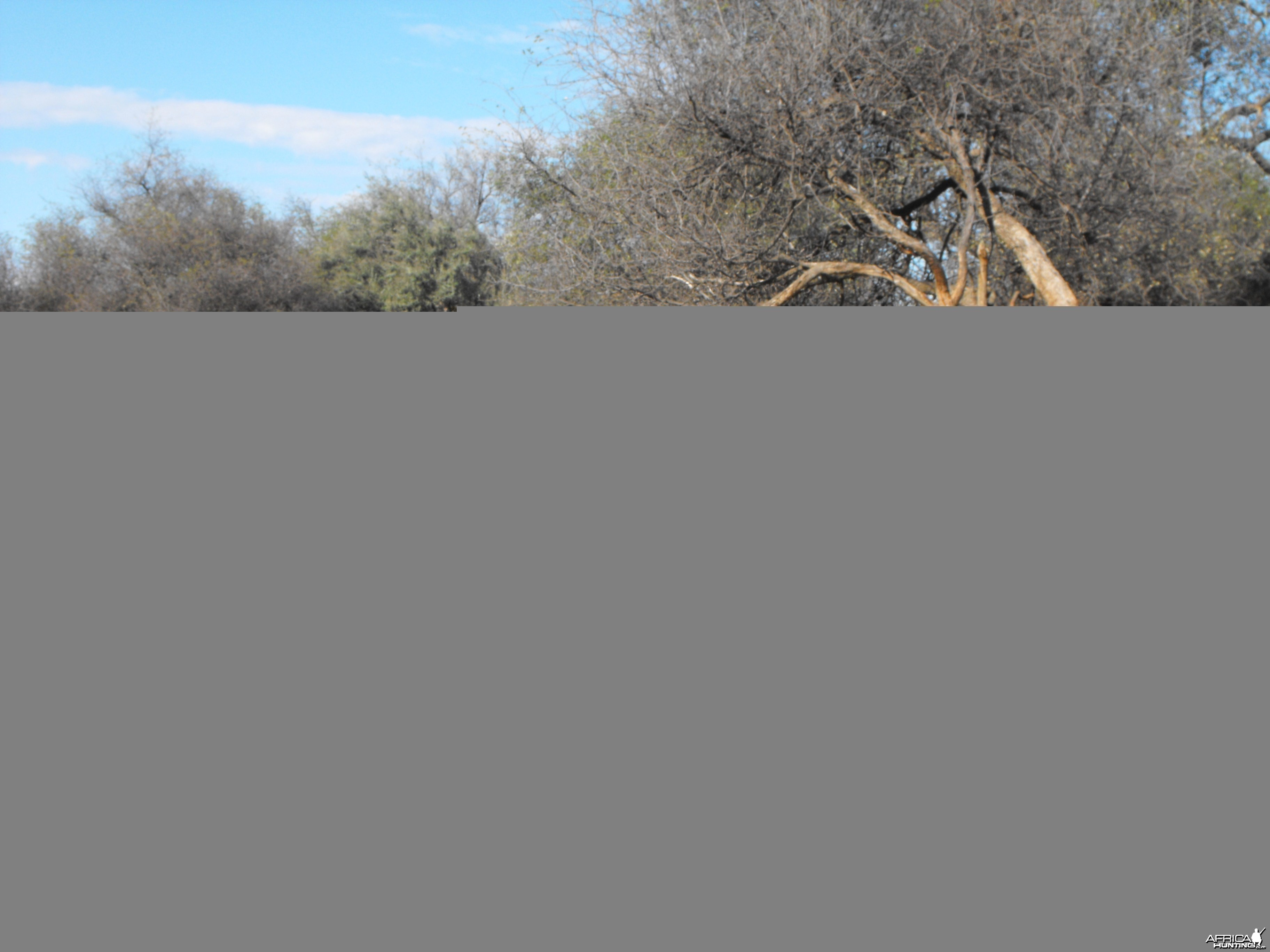 guinea fowl on the ground!