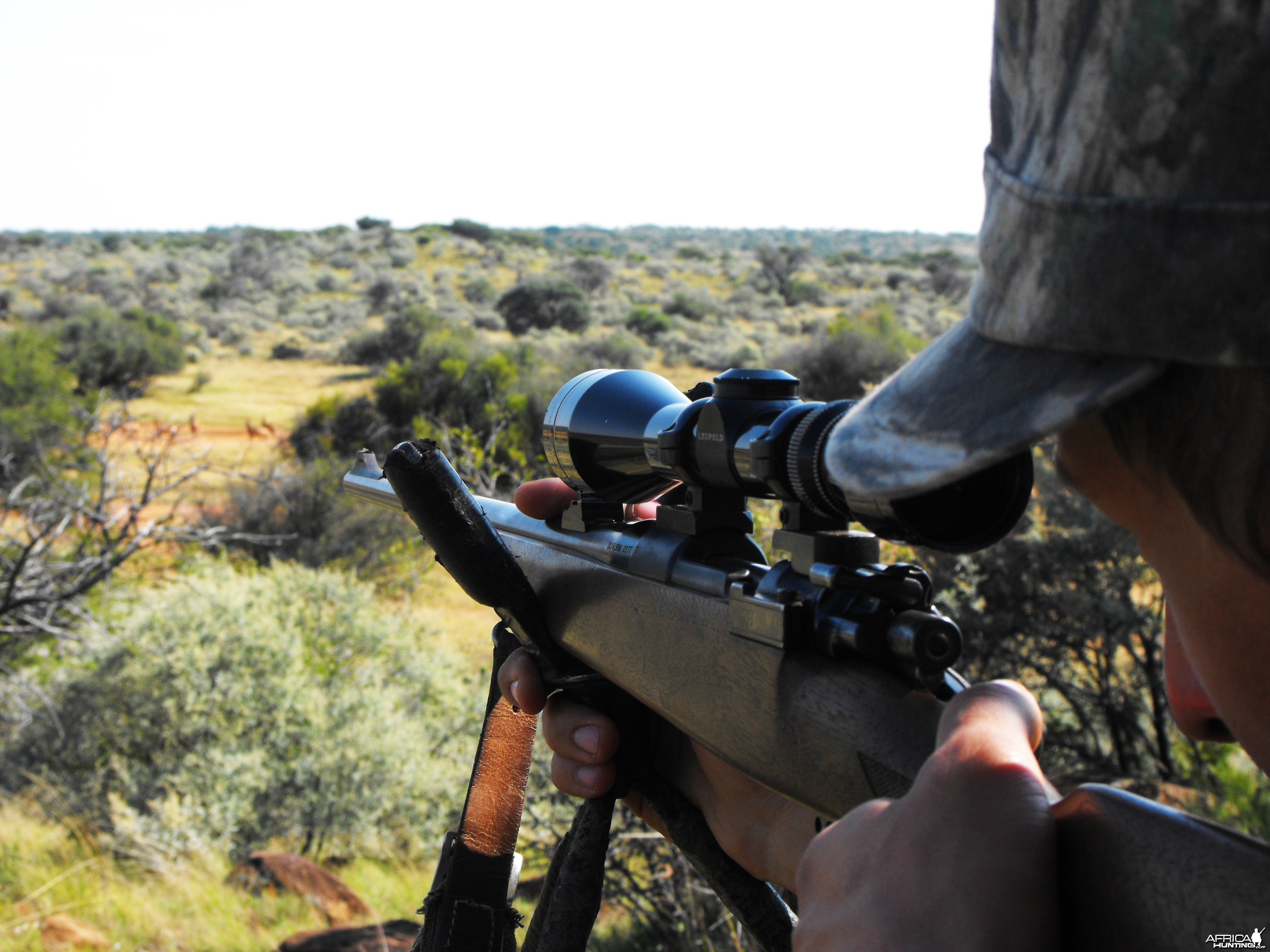 My brother aiming at an Impala ram behind ll those nice hartebeest bulls in