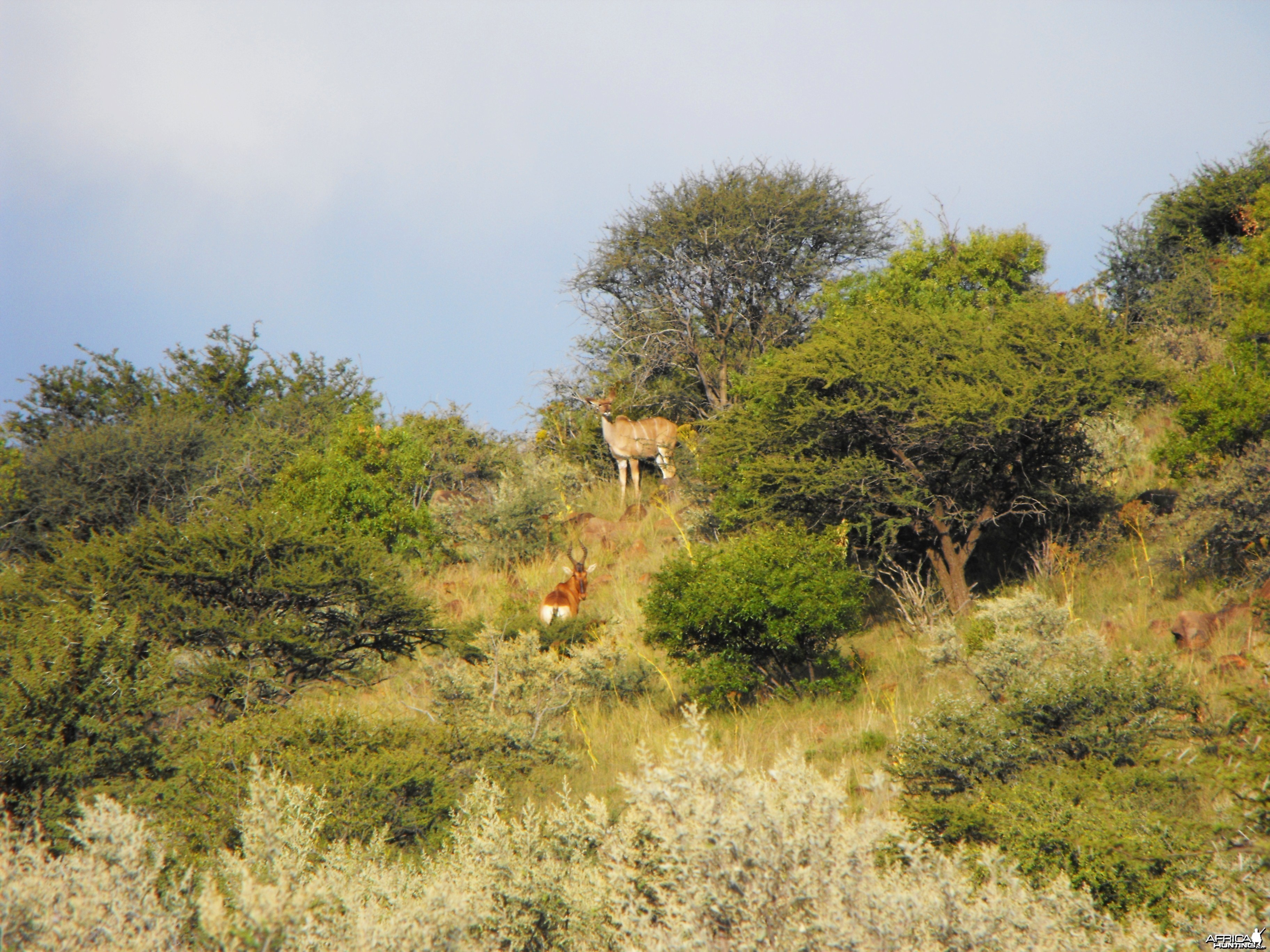 Kudu and Hartebeest