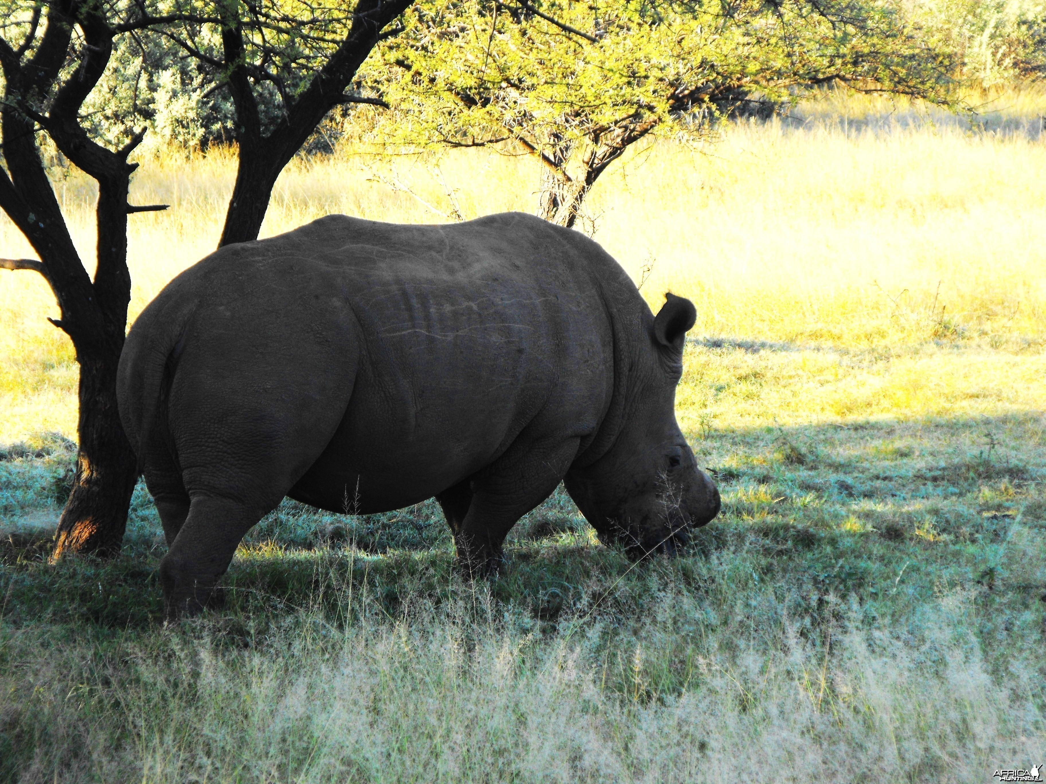 First Rhino!