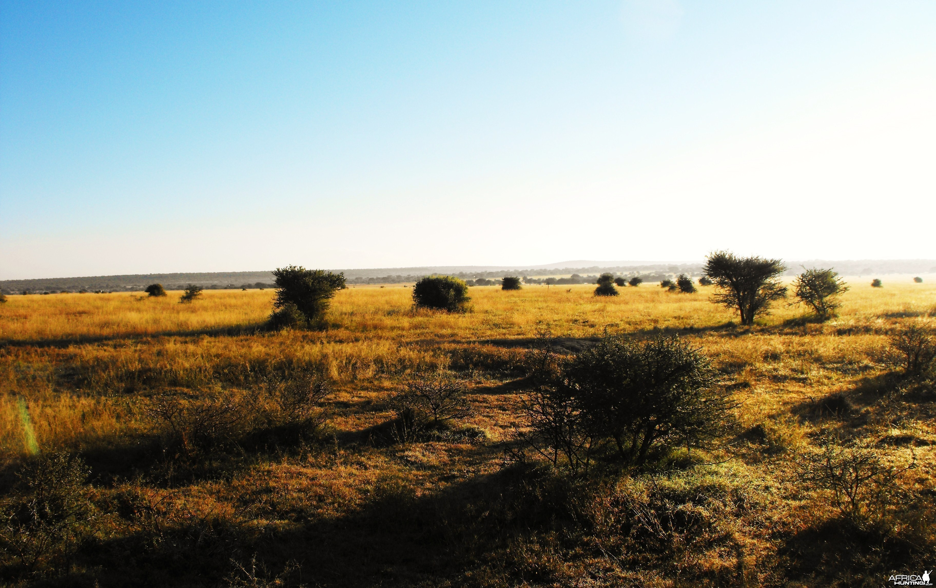 Some of the open country we hunted Blesbok one morning