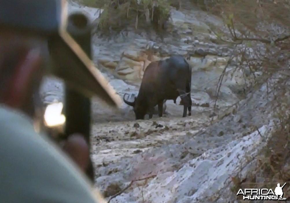 Hunting Buffalo