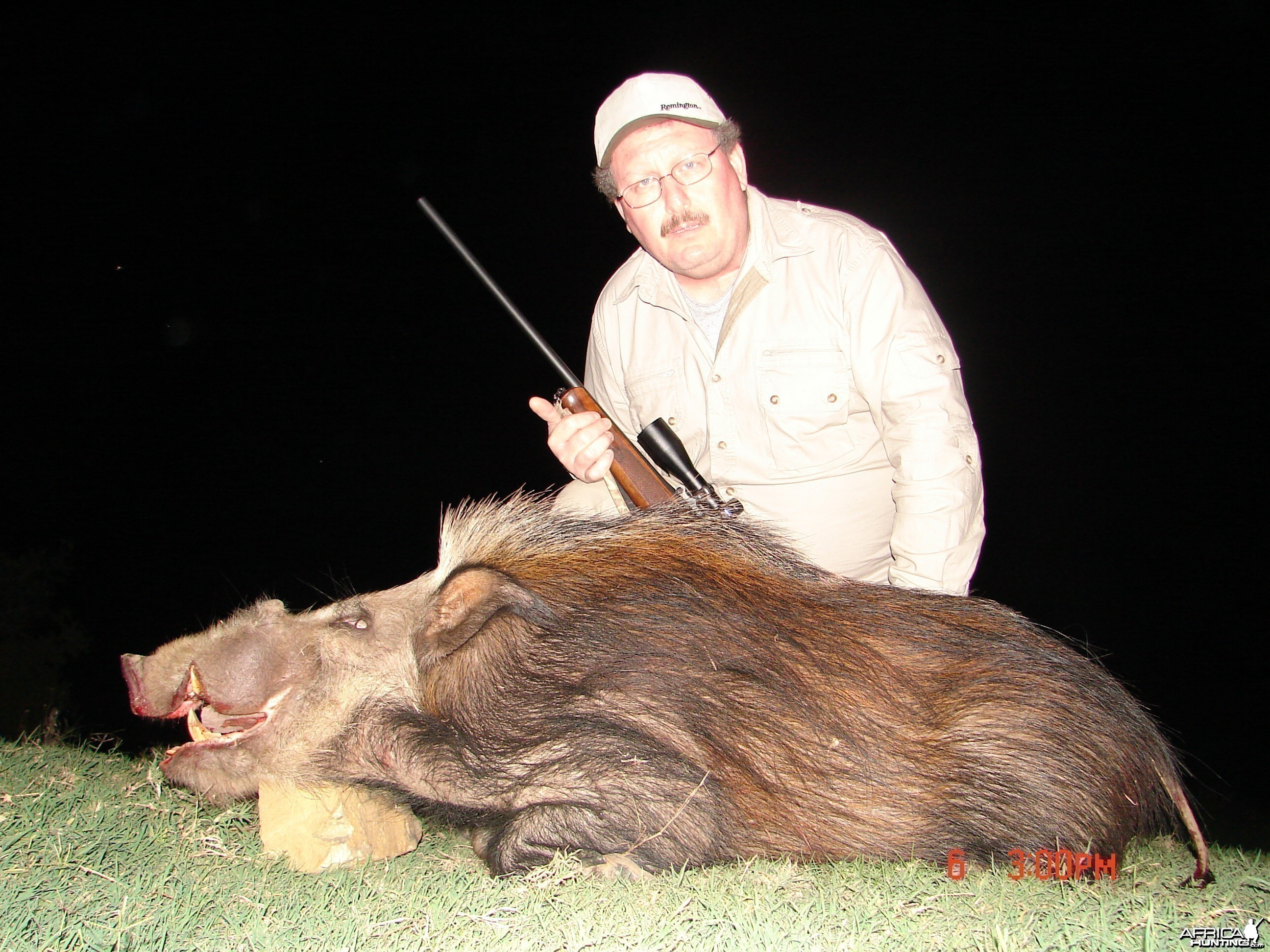 Bush pig shot in the cape