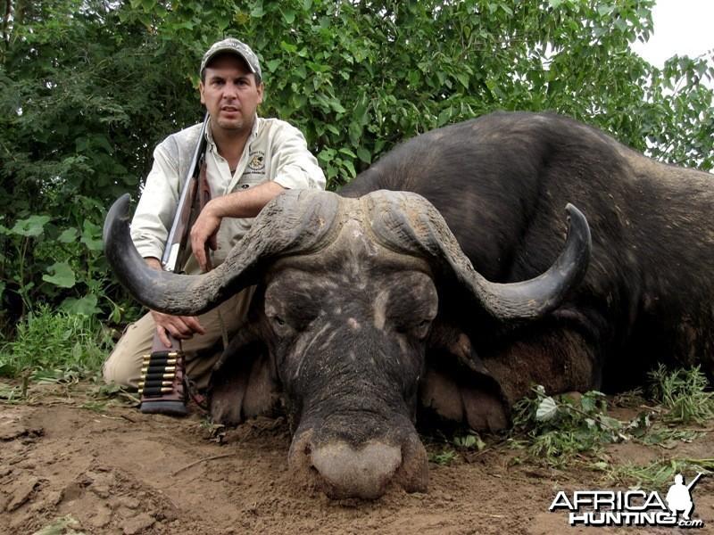 Buffalo hunt on Limpopo river Zimbabwe