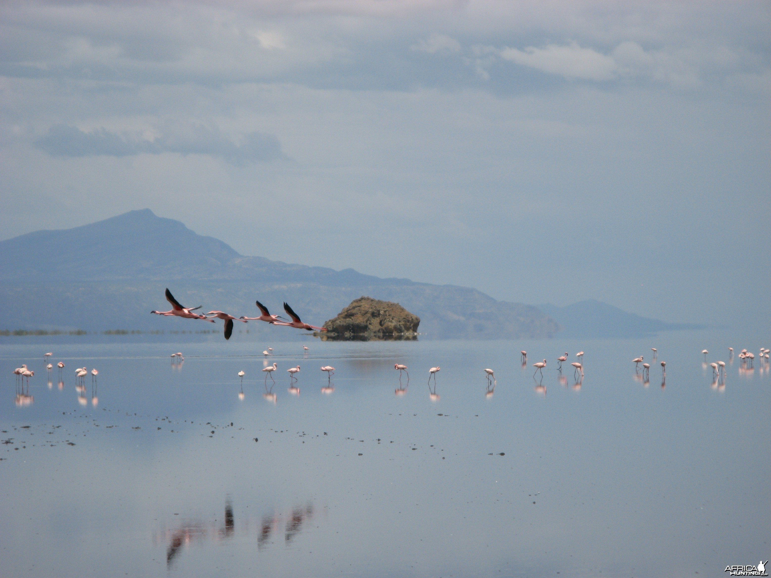 Lesser Flamingos at Lake Natron