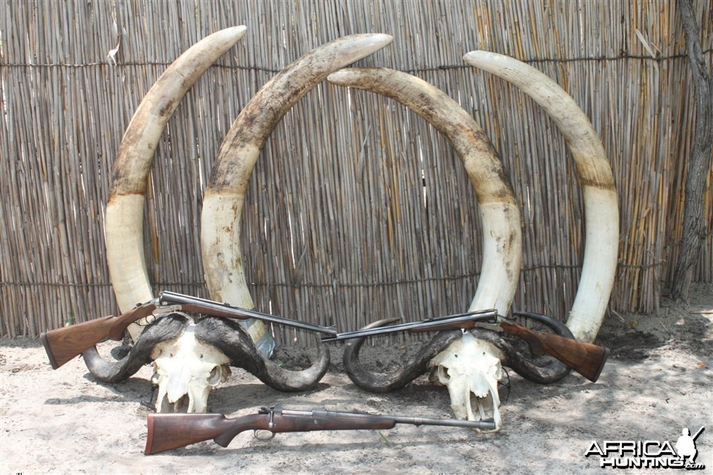 4 different Elephant bull tusks