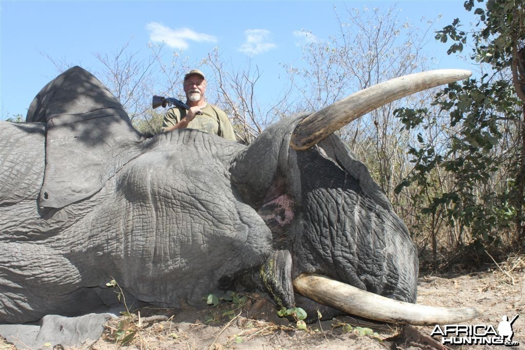 43 lbs Elephant hunted in the Caprivi Namibia