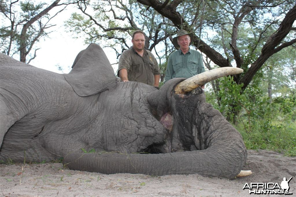 50 lbs Elephant hunted in the Caprivi Namibia