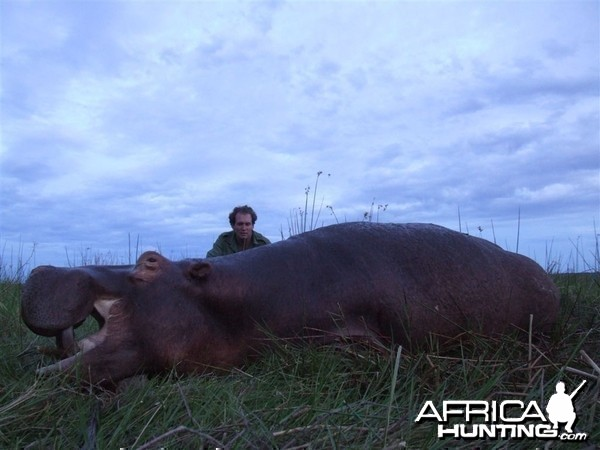 Hippo hunted in Namibia Chobe flood plains