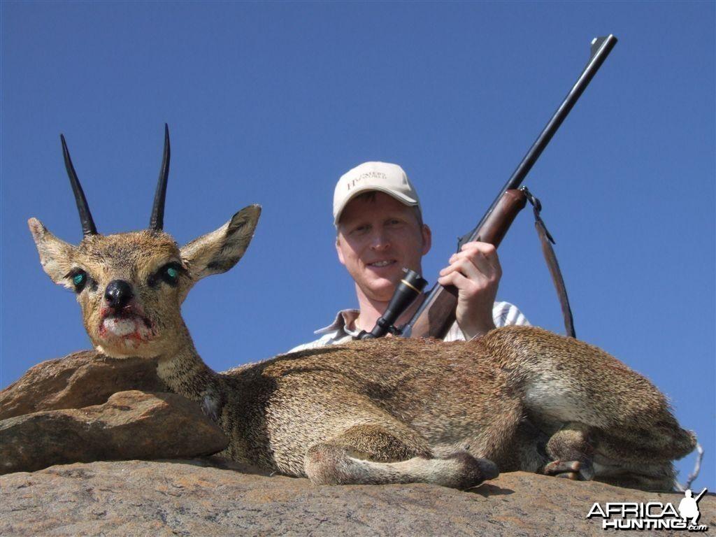 Klipspringer Namibia