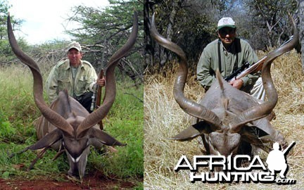 Hunting Greater Kudu
