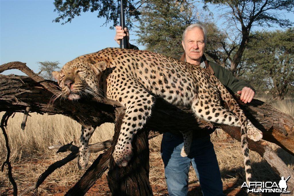 Kalahari Leopard