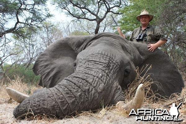 Symmetrical 63 x 63 lbs Elephant hunted in the Caprivi Namibia