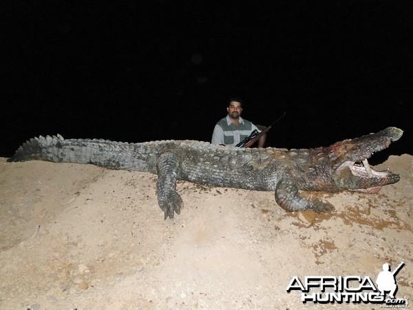 mugger/indus crocodile 14 feet