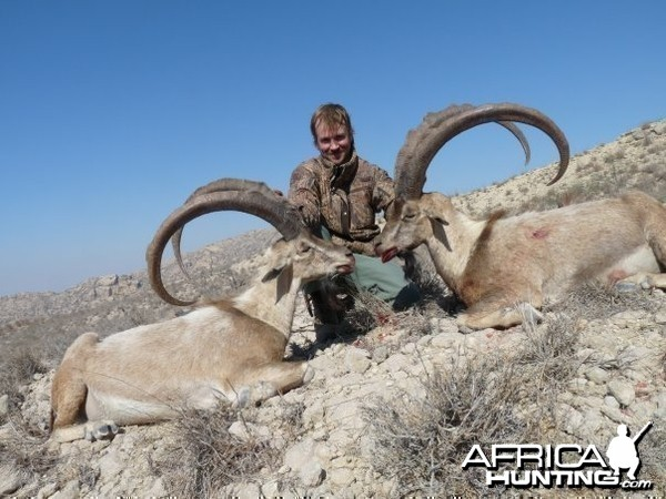 Sindh Ibex taken in Sindh with me by my friend Andrew