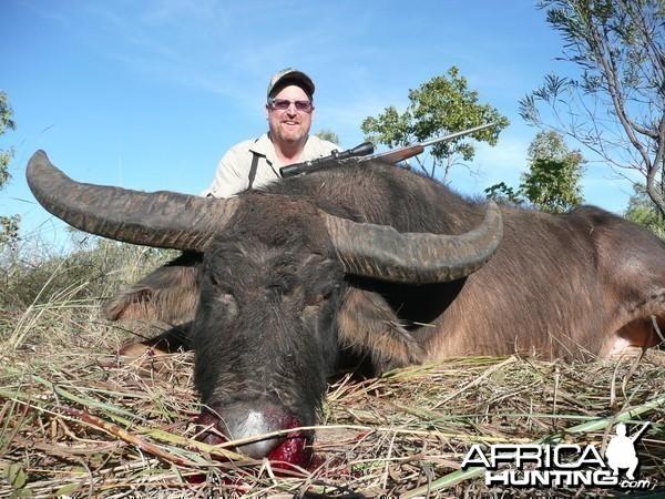 Hunting Australian Buffalo
