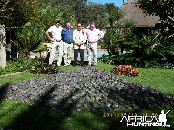 Pigeon and  Doves shooting Free State South Africa