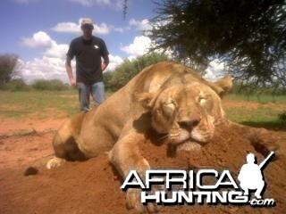 25'' lioness