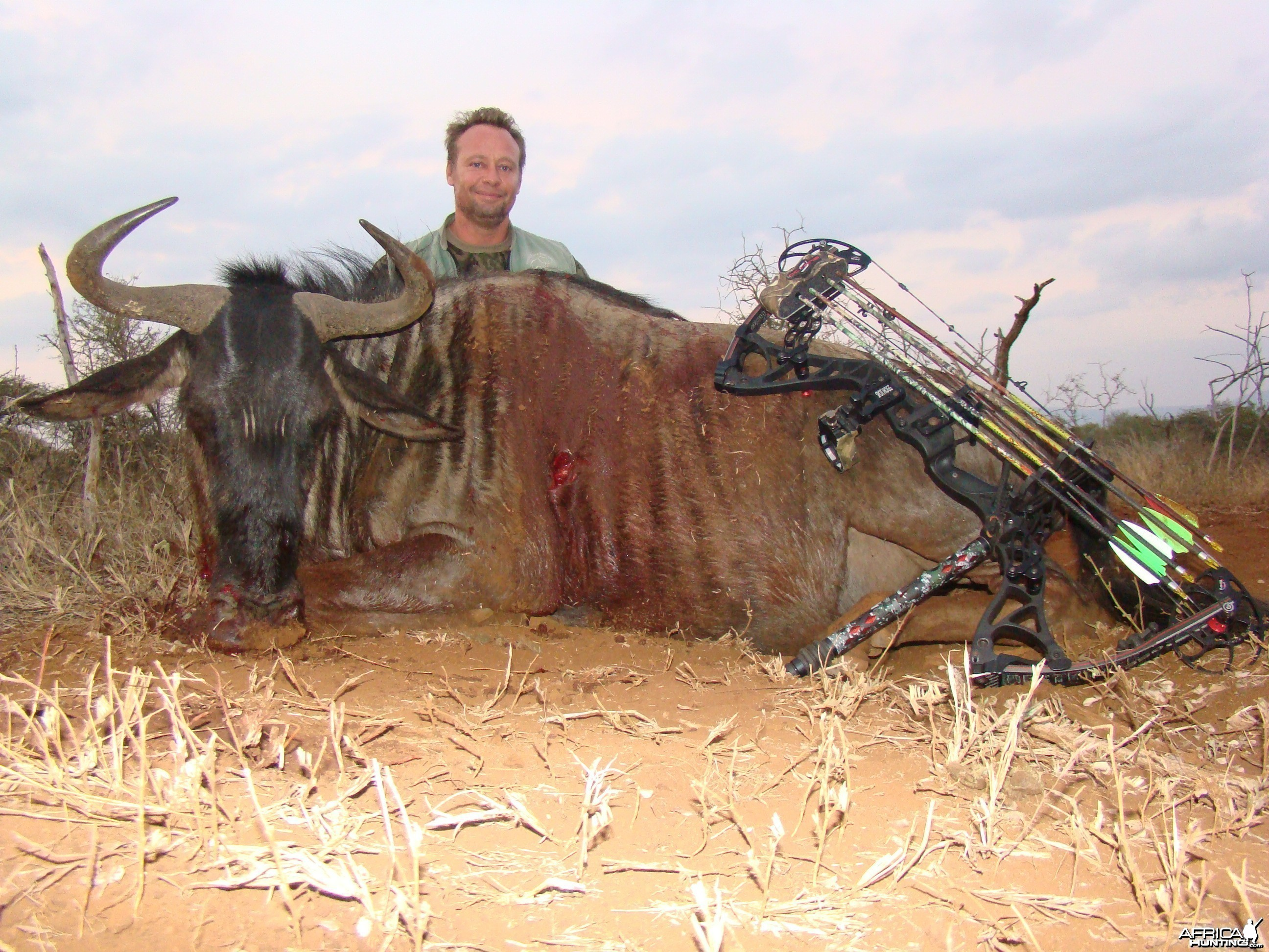 Wildebeest Leeukop Safaris