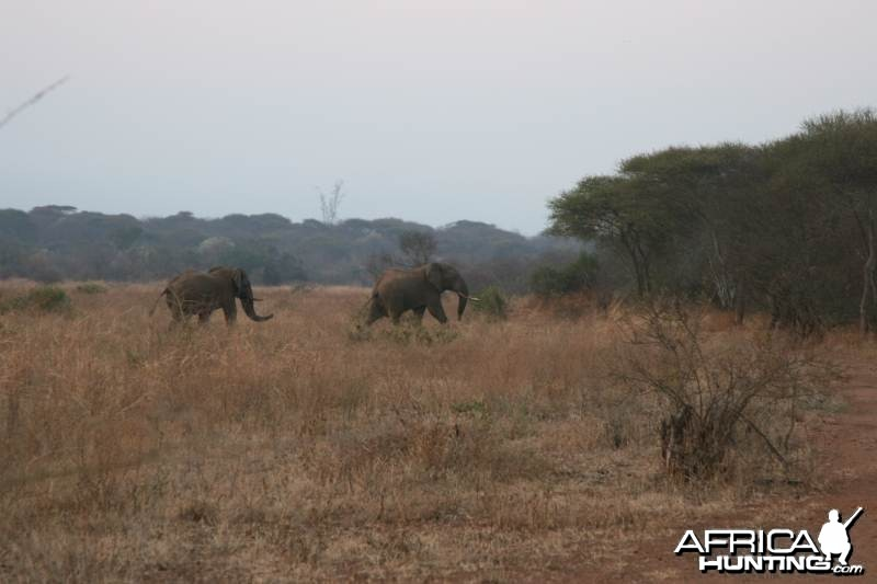 We spotted elephants in our hunting area too