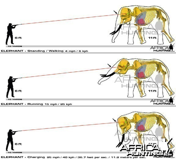Hunting Elephant Shot Placement