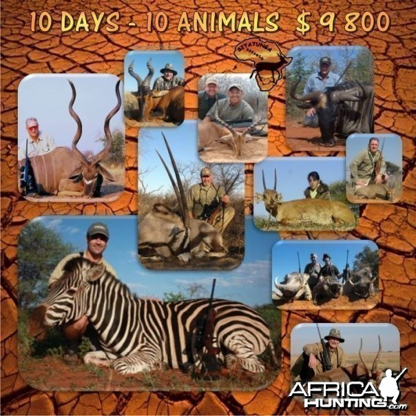 10 Day - 10 Animals