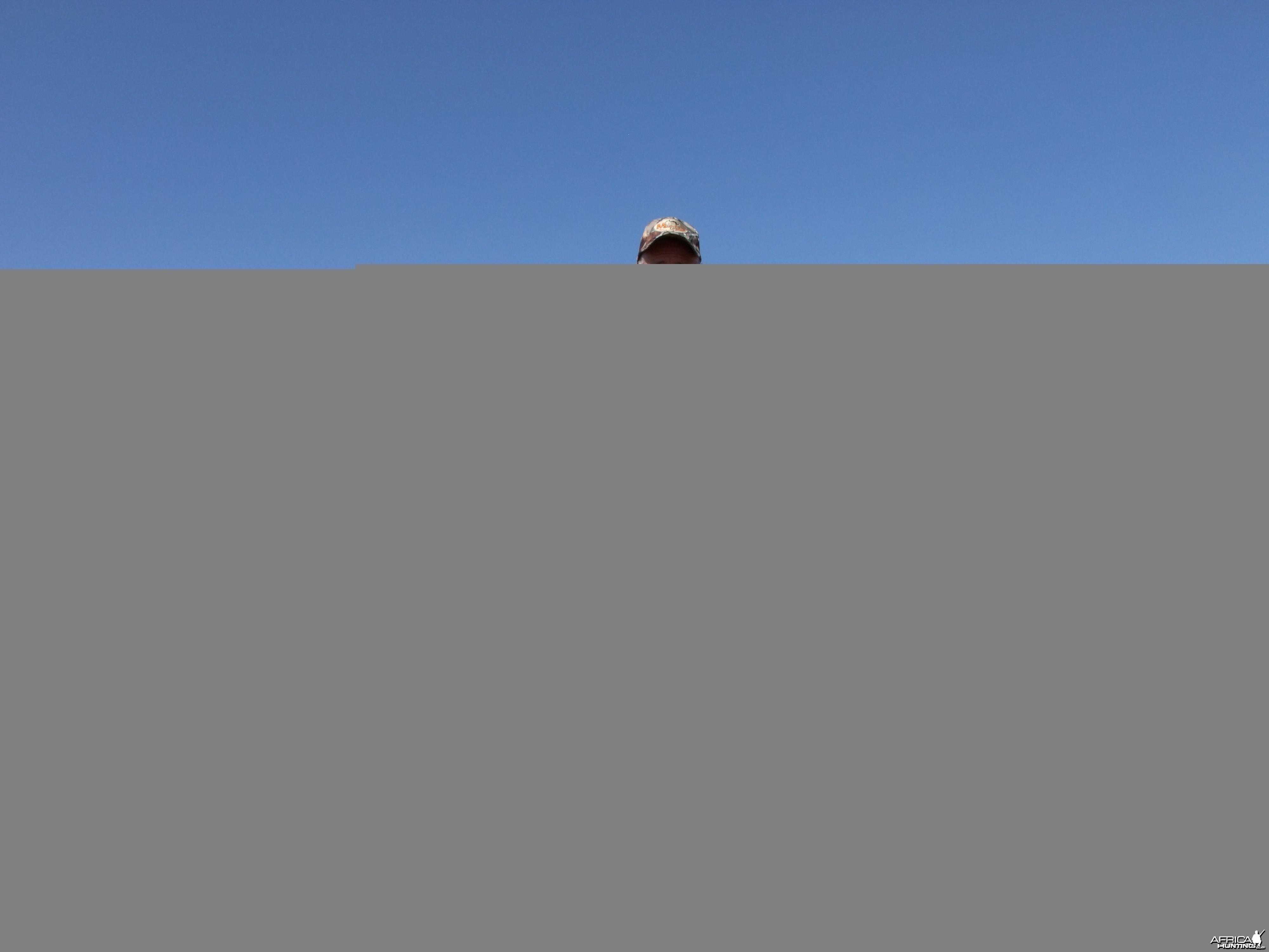 Dads Zebra