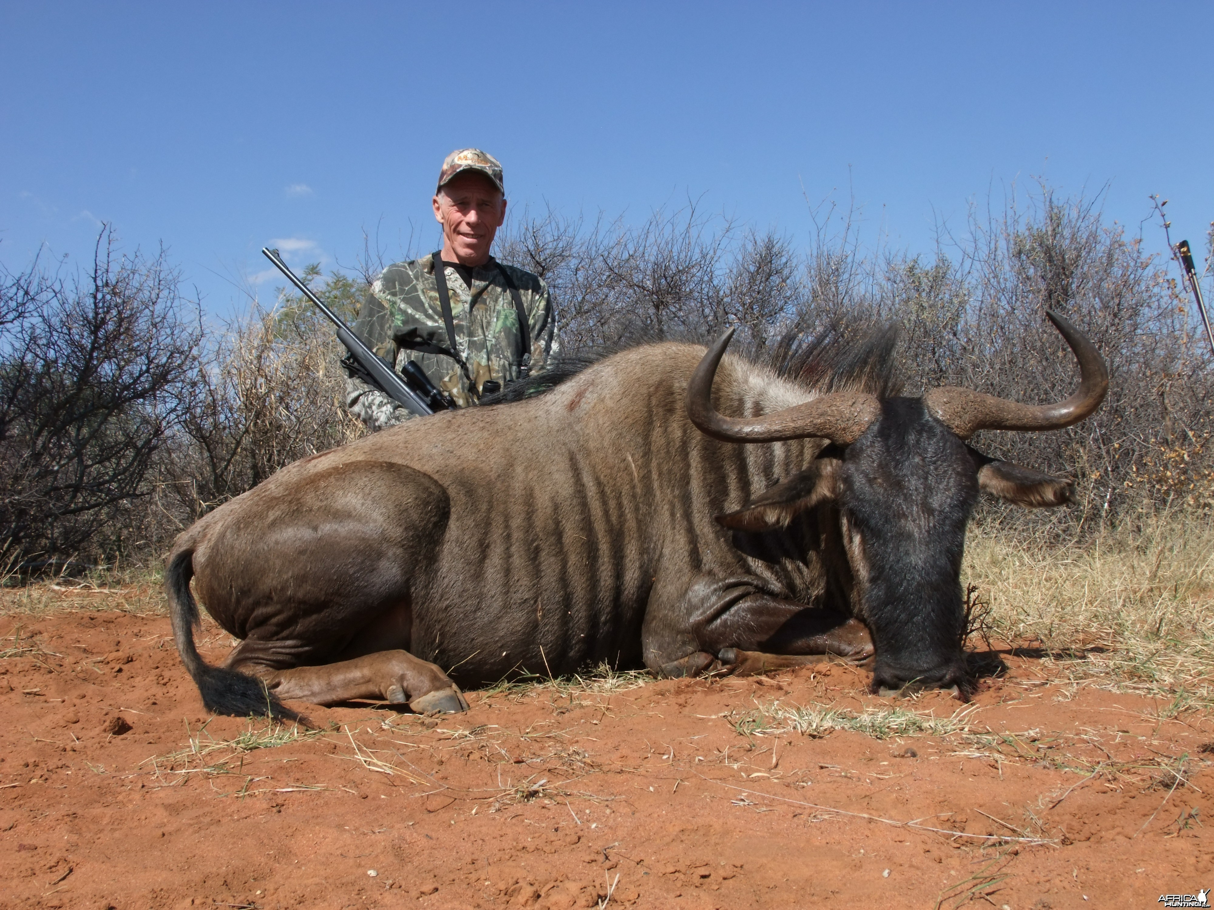 Dads Wildebeest