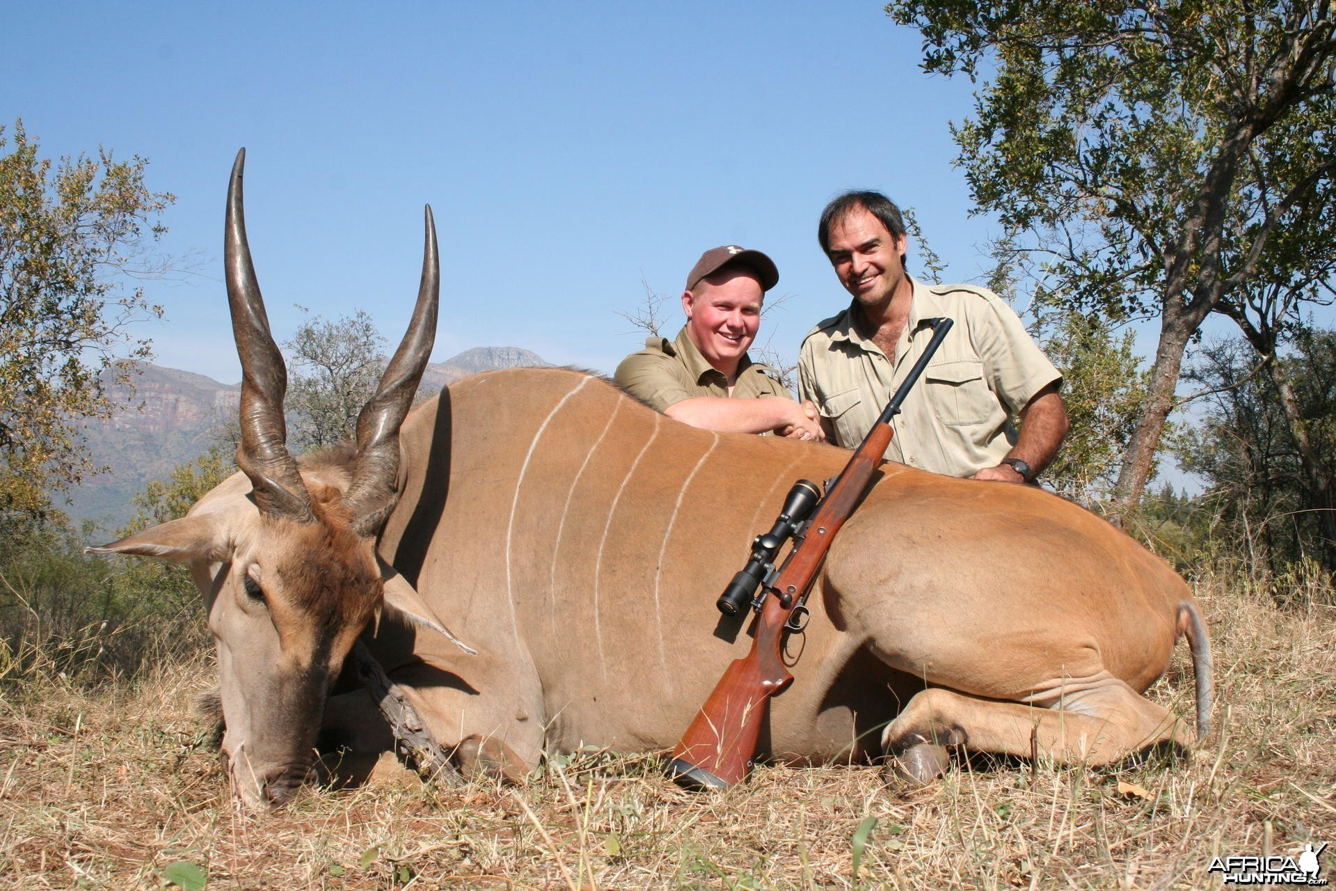 Eland hunted in Limpopo SA