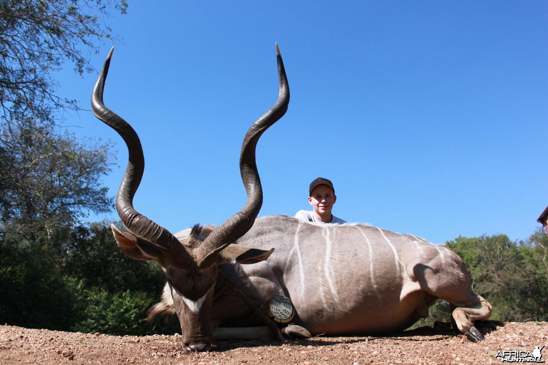 Kudu hunted in Limpopo SA
