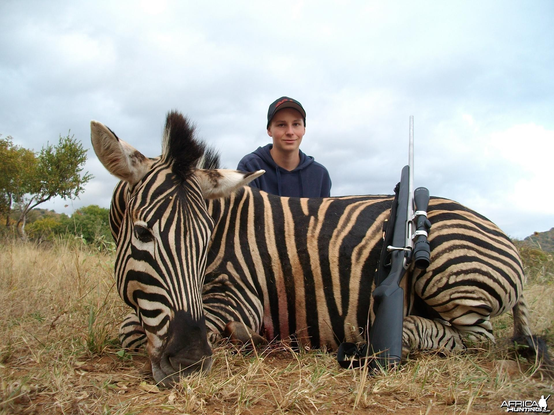 Zebra hunted in Limpopo SA