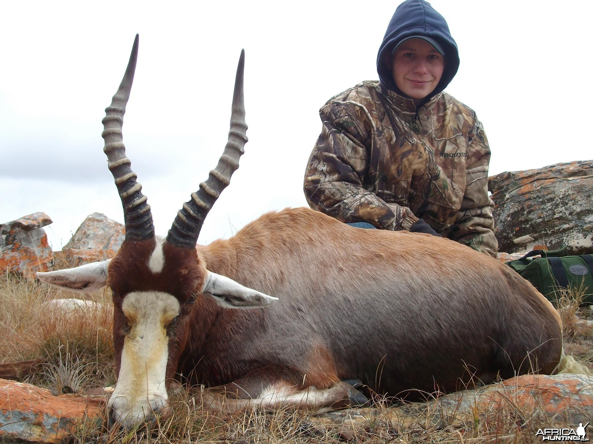 Blesbuck hunted in Limpopo SA