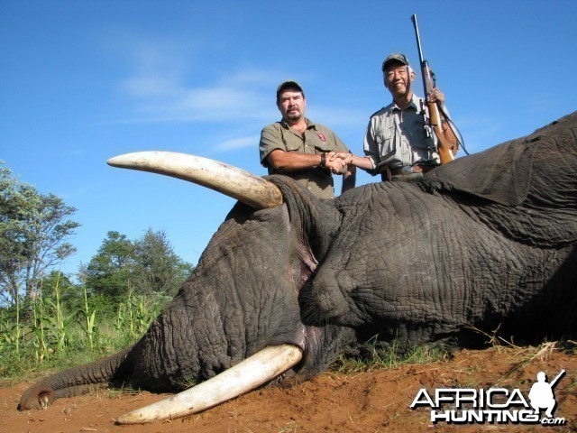 Trophy Elephant 2011