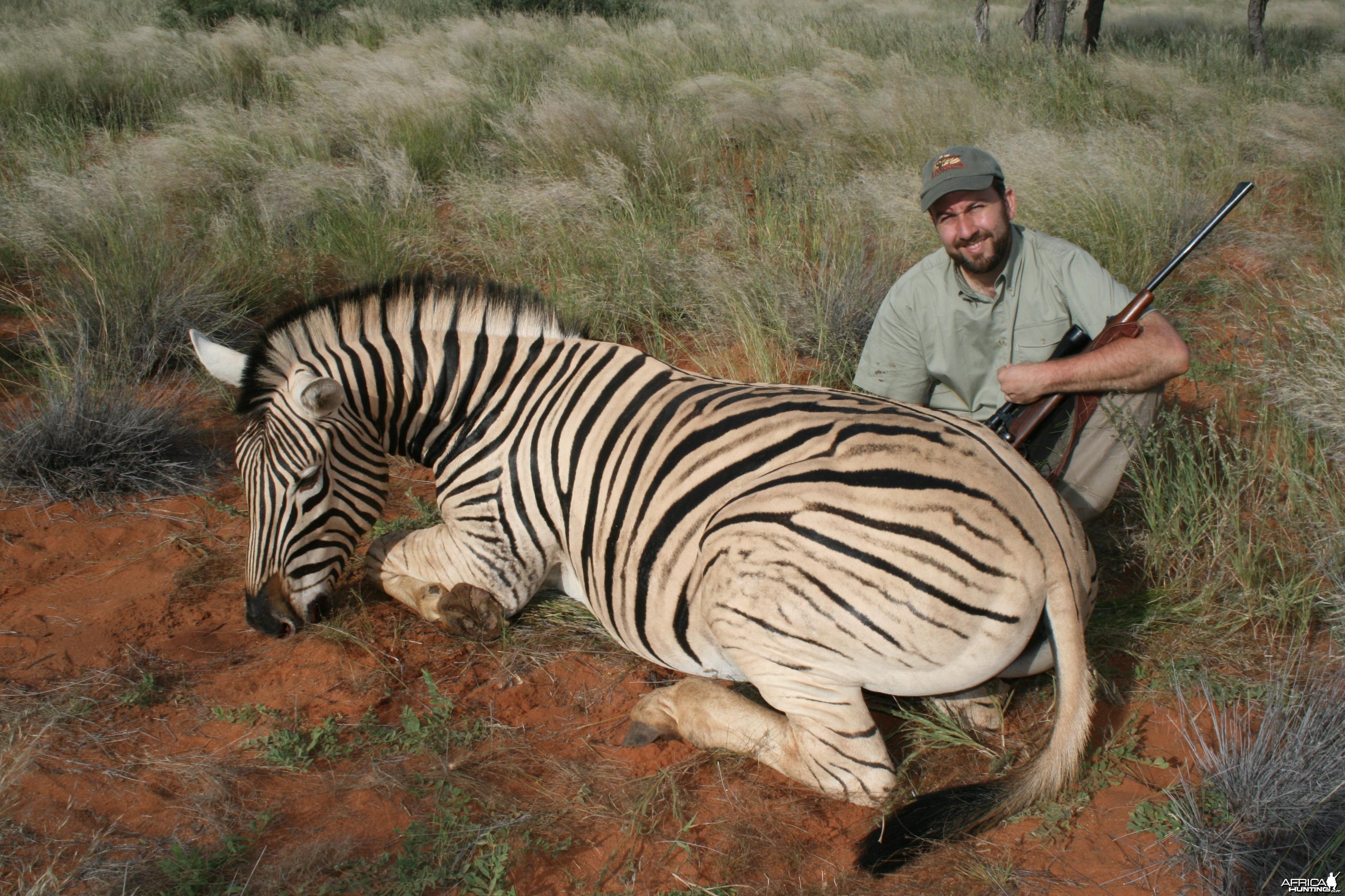 Burchell Zebra, Kalahari