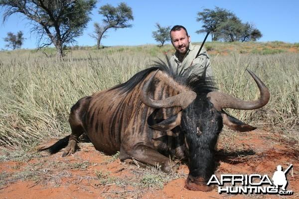 Blue Wildebeest, Kalahari