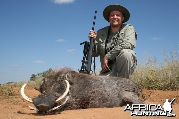 Warthog, Northern Namibia