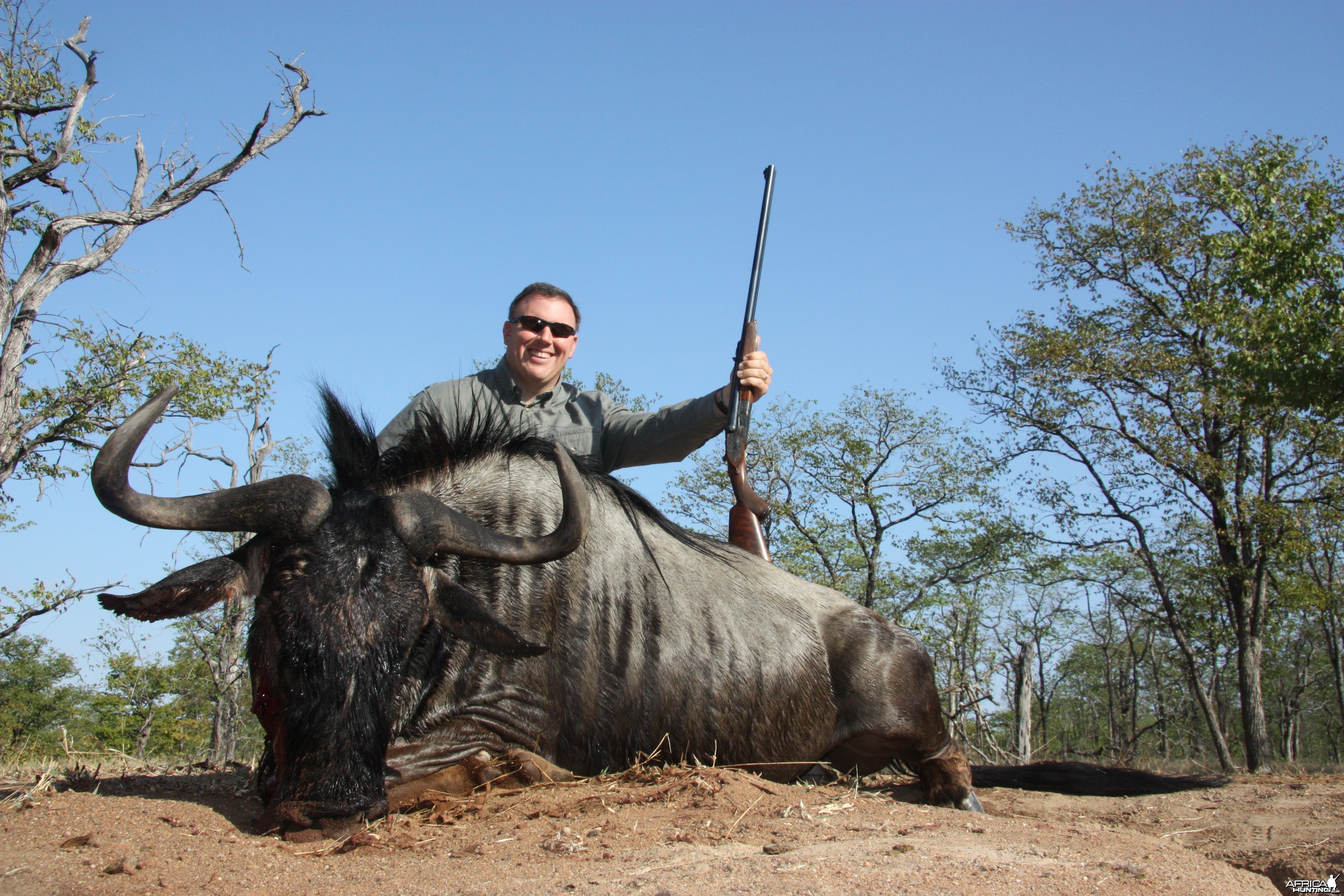 2011 Save Valley Blue Wildebeest