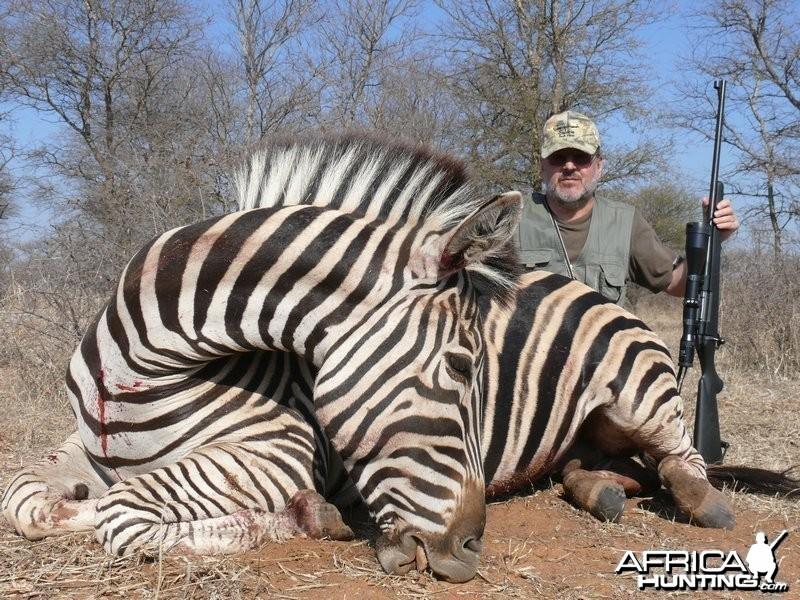 Zebra 2008