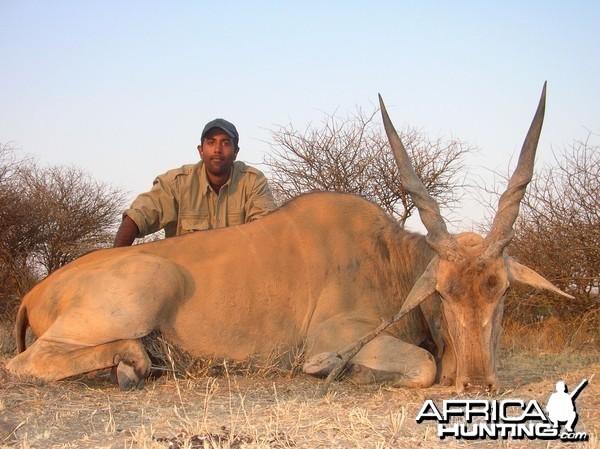 Cape Eland Hunting in Namibia