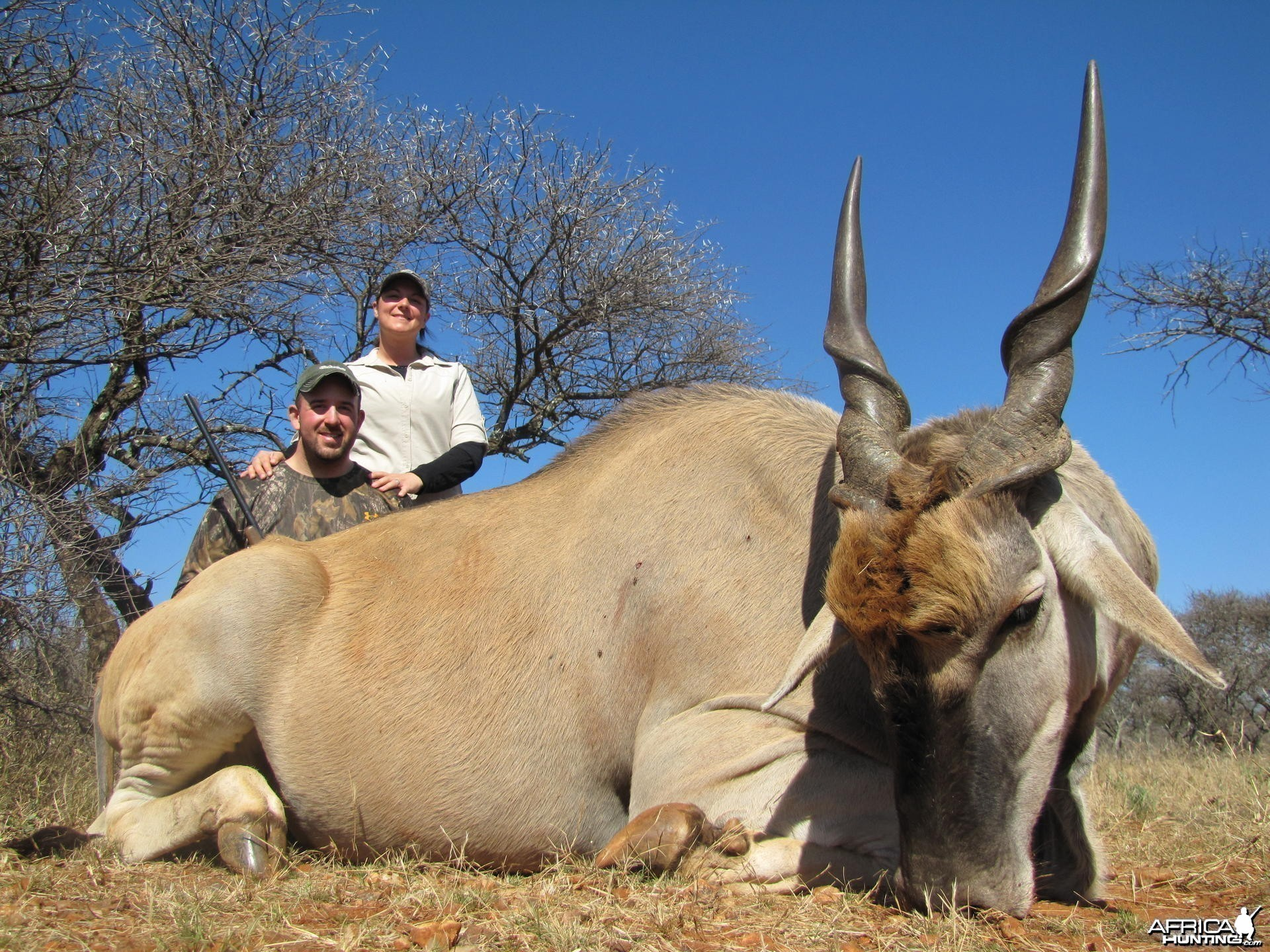Eland hunted with Hartzview Safaris SA