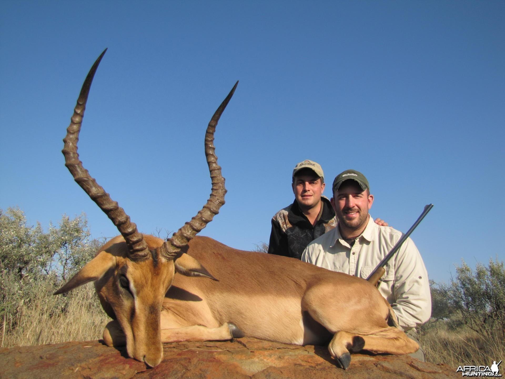 Impala hunted with Hartzview Safaris SA