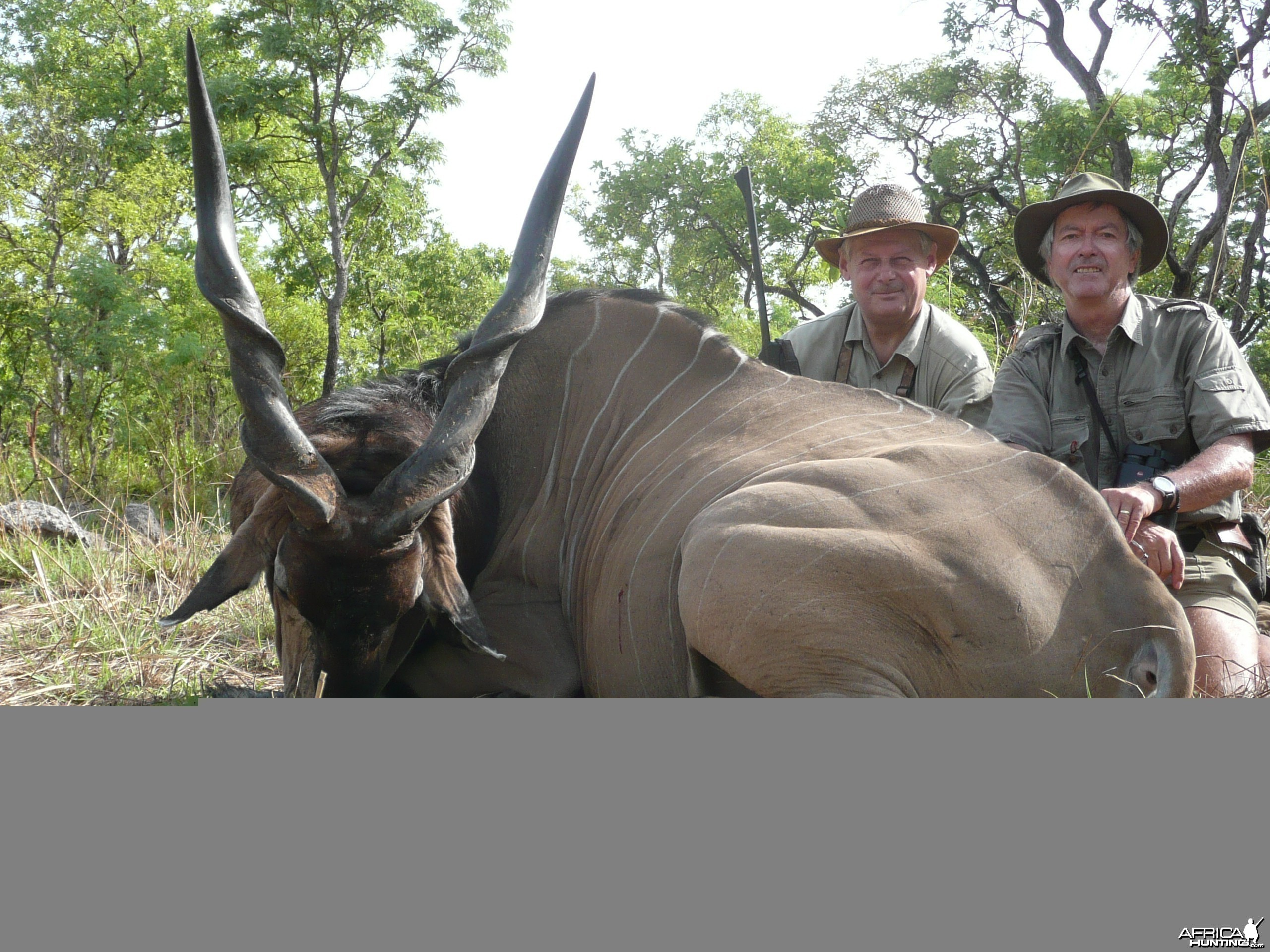 Very old Lord Derby eland hunted in CAR with Rudy Lubin Safaris